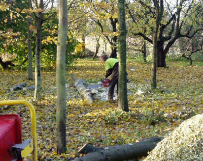 gekapte bomen afkorten tot brandhout
