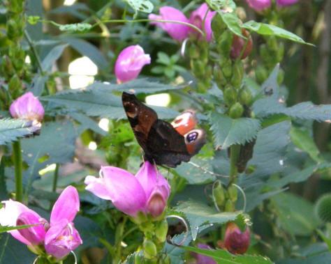 Tuinontwerp vlinder
