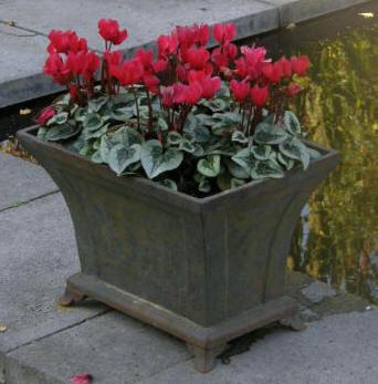 bloemen op pot